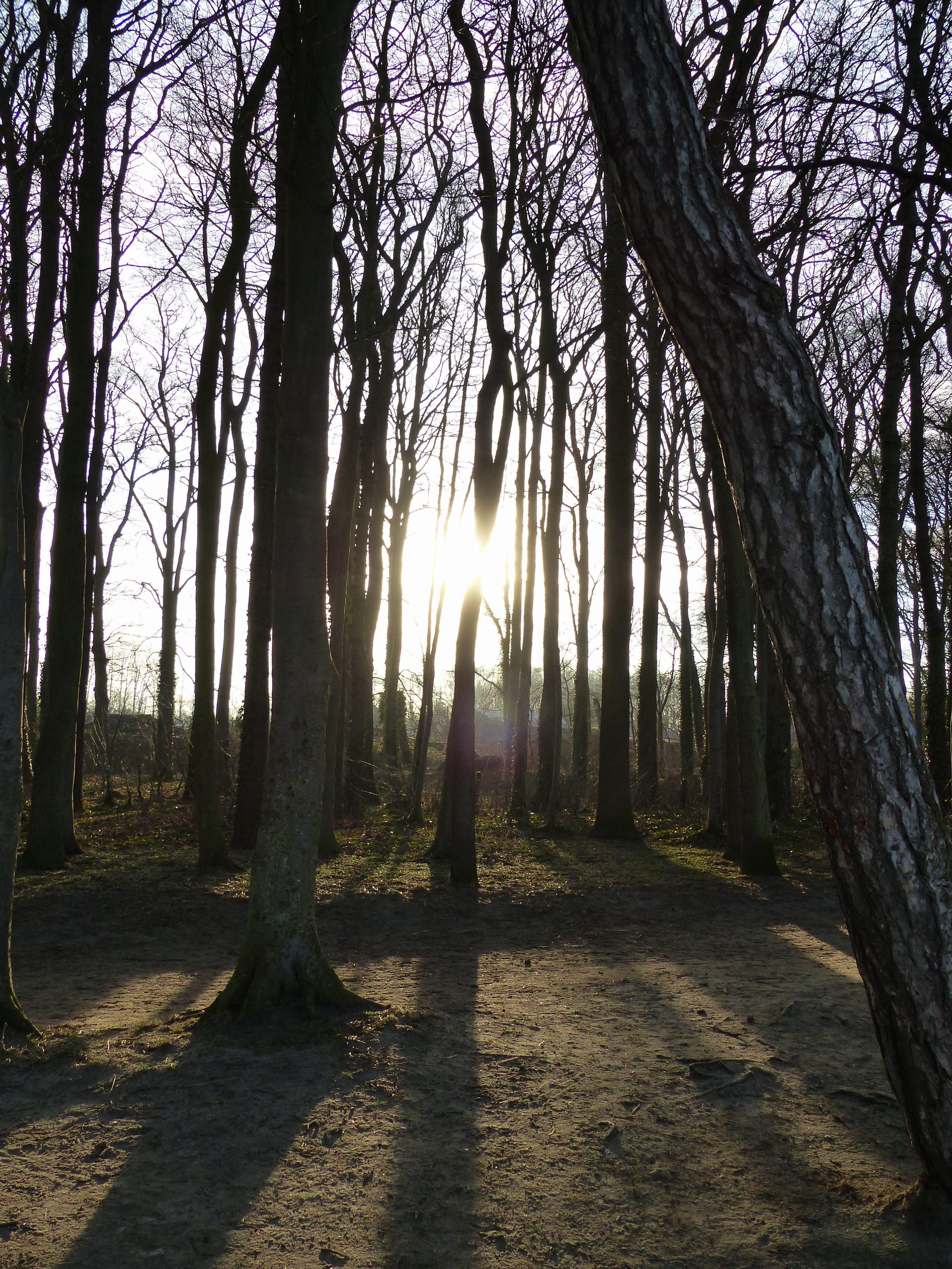 Sonnenschein durch Küstenwald