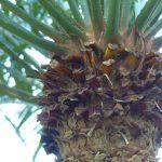 Palmenstamm mit Blattstengeln